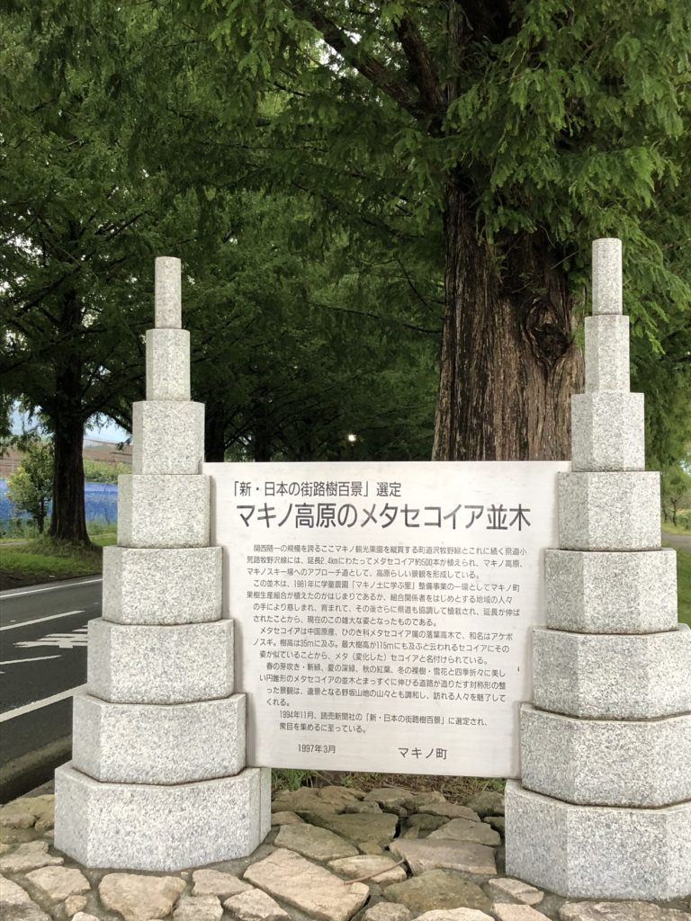 dq-walk-Metasequoia-10